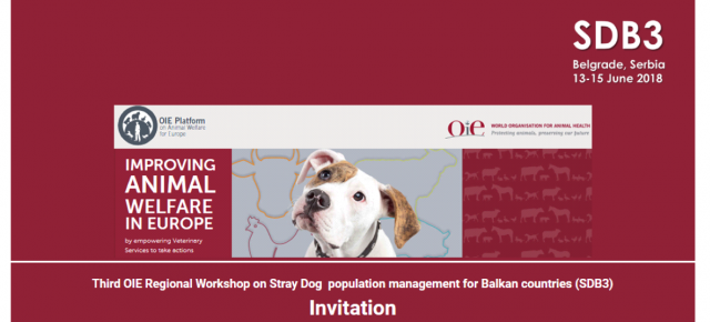 RAWC trainers held a workshop at the OIE 3rd Stray dog Workshop for Balkan countries